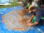 Briquette project at NCDC